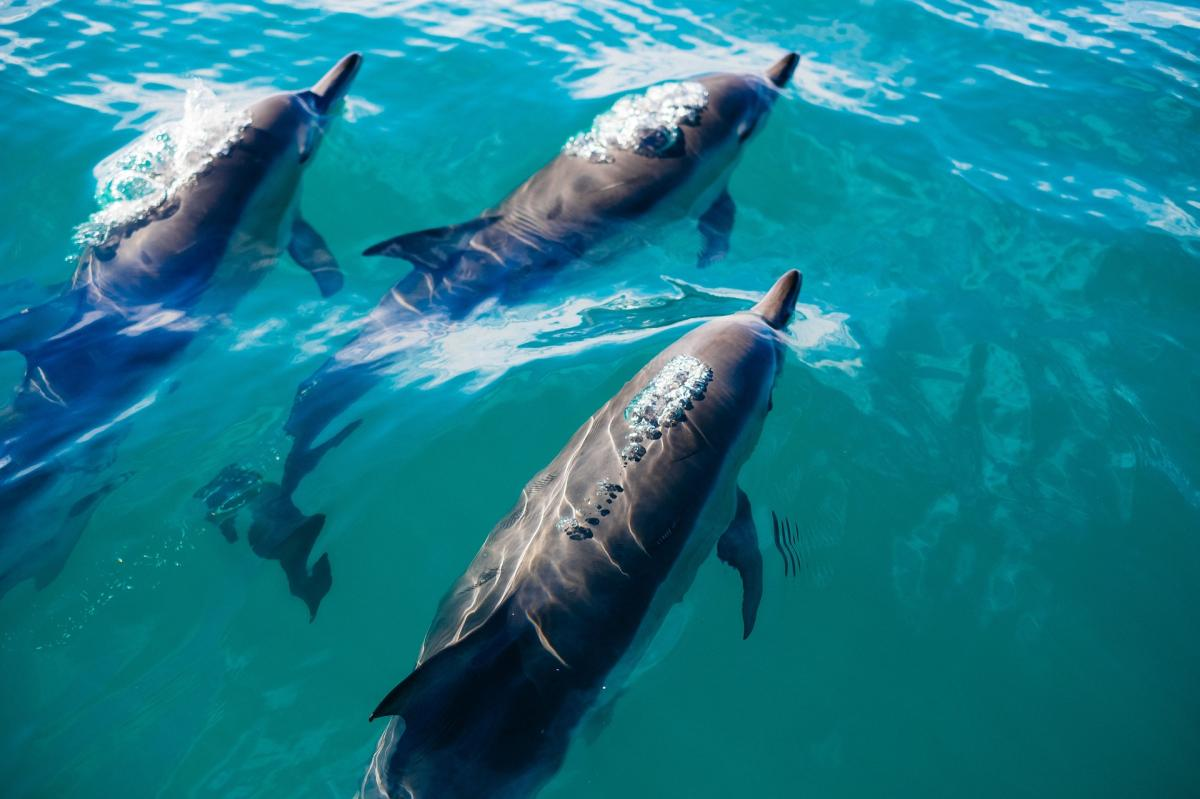 10 HEARTBREAKING FACTS ABOUT DOLPHINS