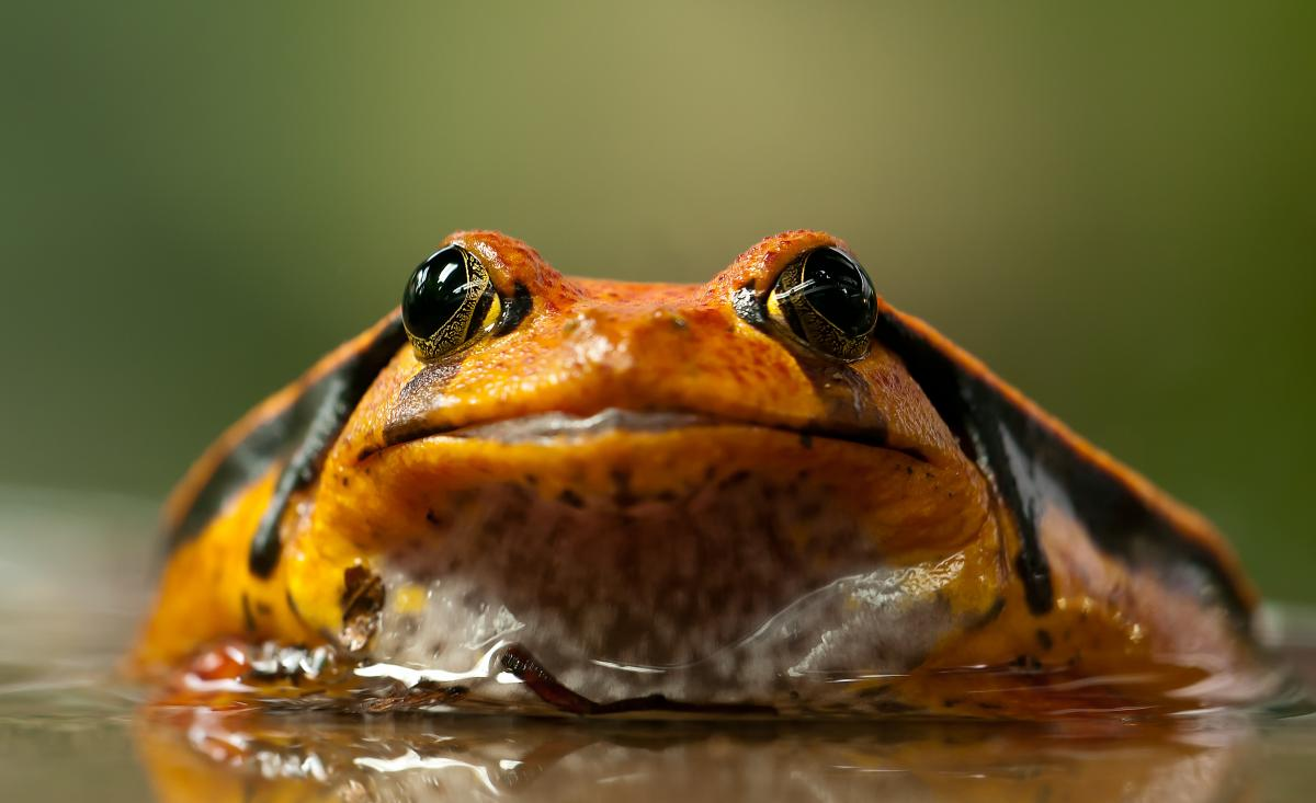 The Frogs of blogging