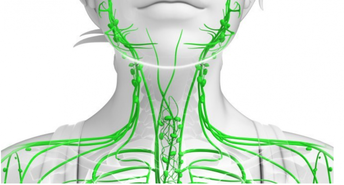 Importance of stimulating the Lymphatic system.