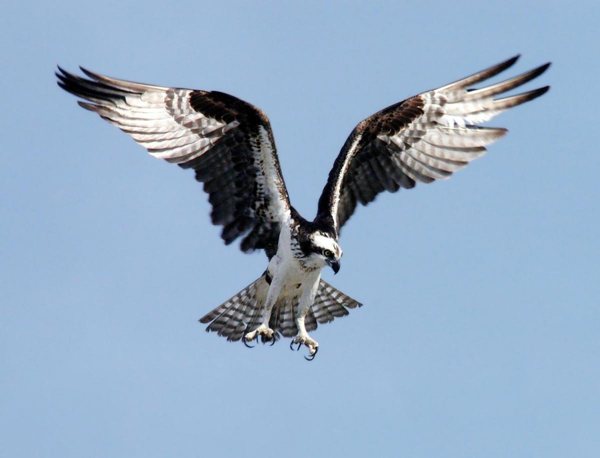 The Lifestyle of an Eagle - An Insight to Unleashing Your Full Potential.