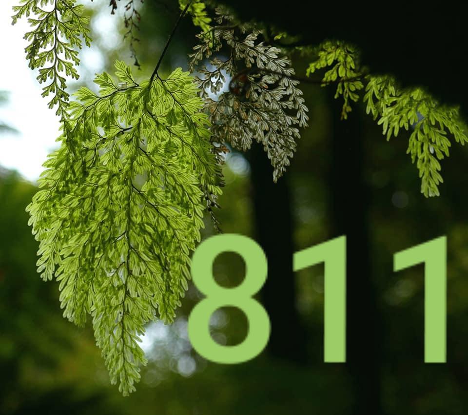 Angel Number 811 - Practice Gratitude and Appreciation