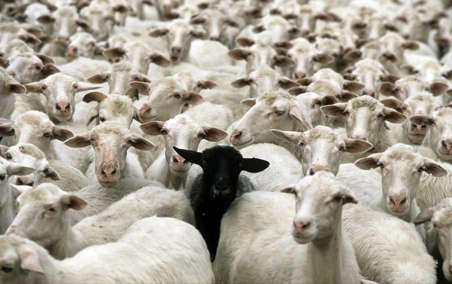 Sergei The Black Sheep Of The Family