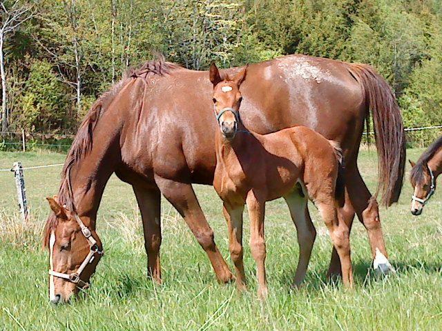 Egen gård vs inackorderad häst.